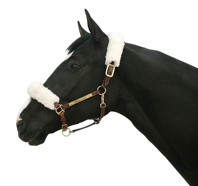 halter-cover